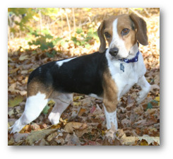 Welcome To Sos Beagles